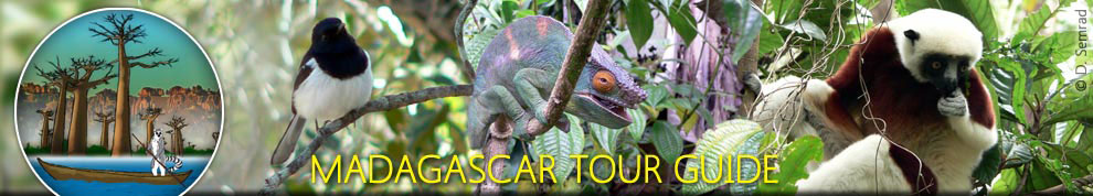 Zahamena Tour | Madagascar East Tours | Indri tour | Nest of Dream tour | Green tour