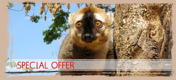 Madagascar tour guide, Special Offers
